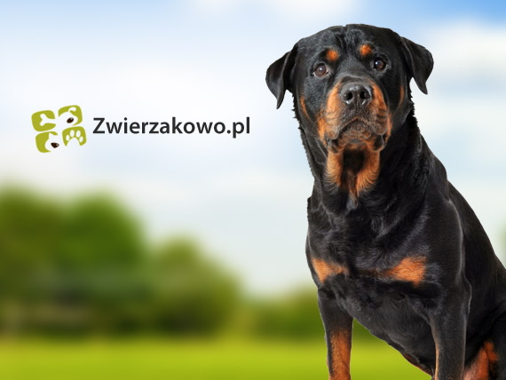 Efekty sprzedażowe email marketingu w zwierzakowo.pl